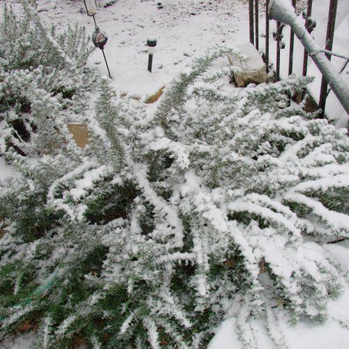 Meal prepping, family & fun-gcc-winter