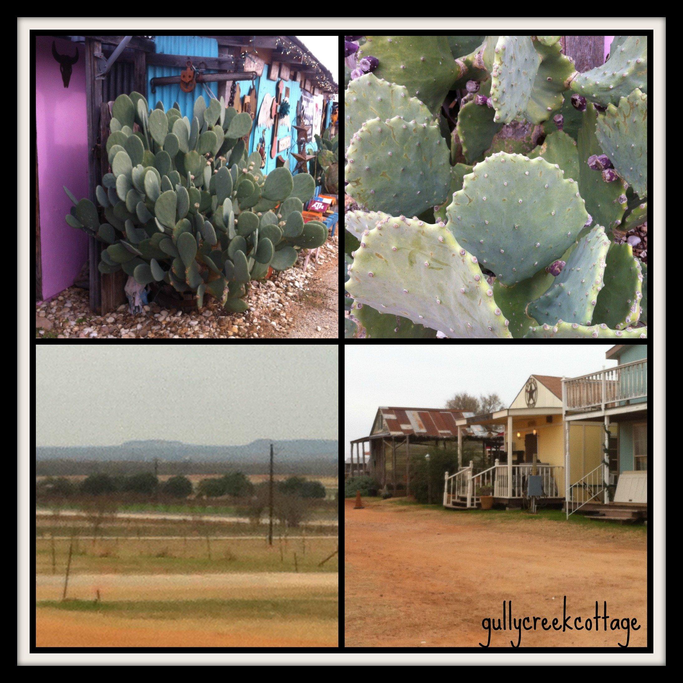 magical site nite-cactus