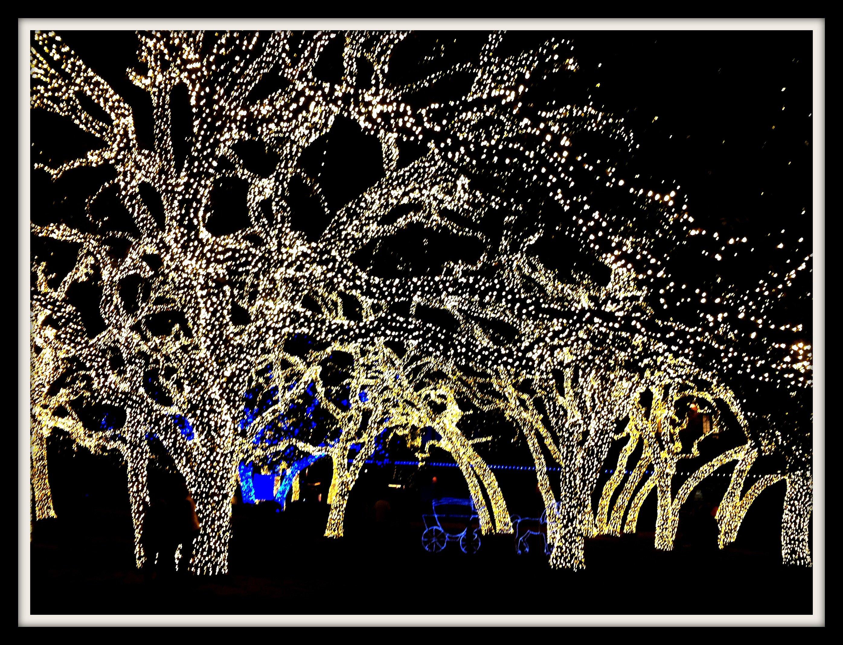 magical site nite-tree-lights