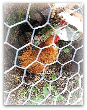 chicks2x