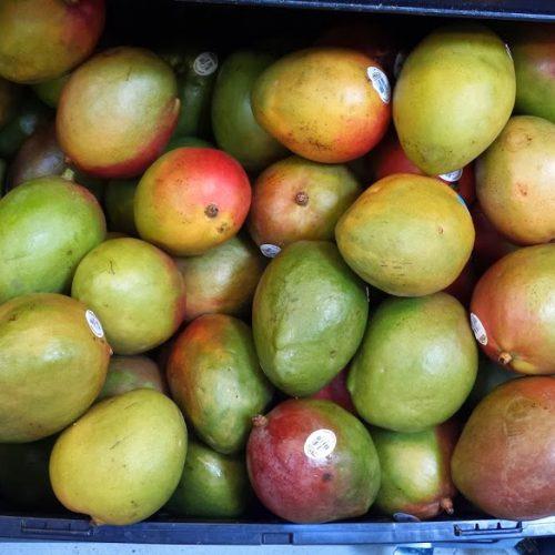 mangoesgcc