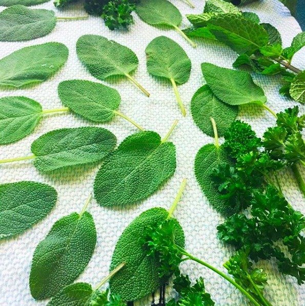 Fresh HERBS: what when how-gullycreekcottage-drying