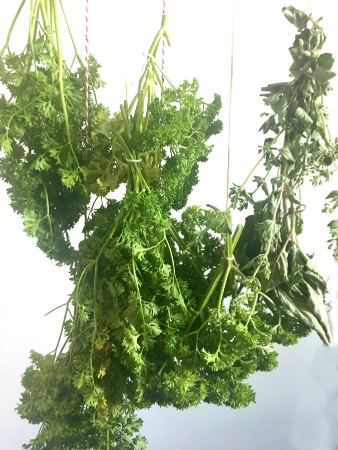 Fresh HERBS: what when how-gullycreekcottage-dry