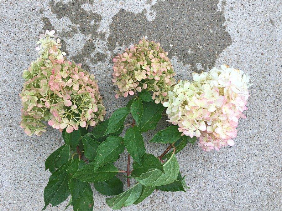 Fresh Hydrangea Door Wreath-gcc-clippings