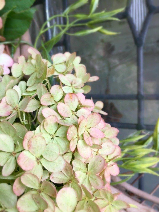 Fresh Hydrangea Door Wreath-gcc-closeup