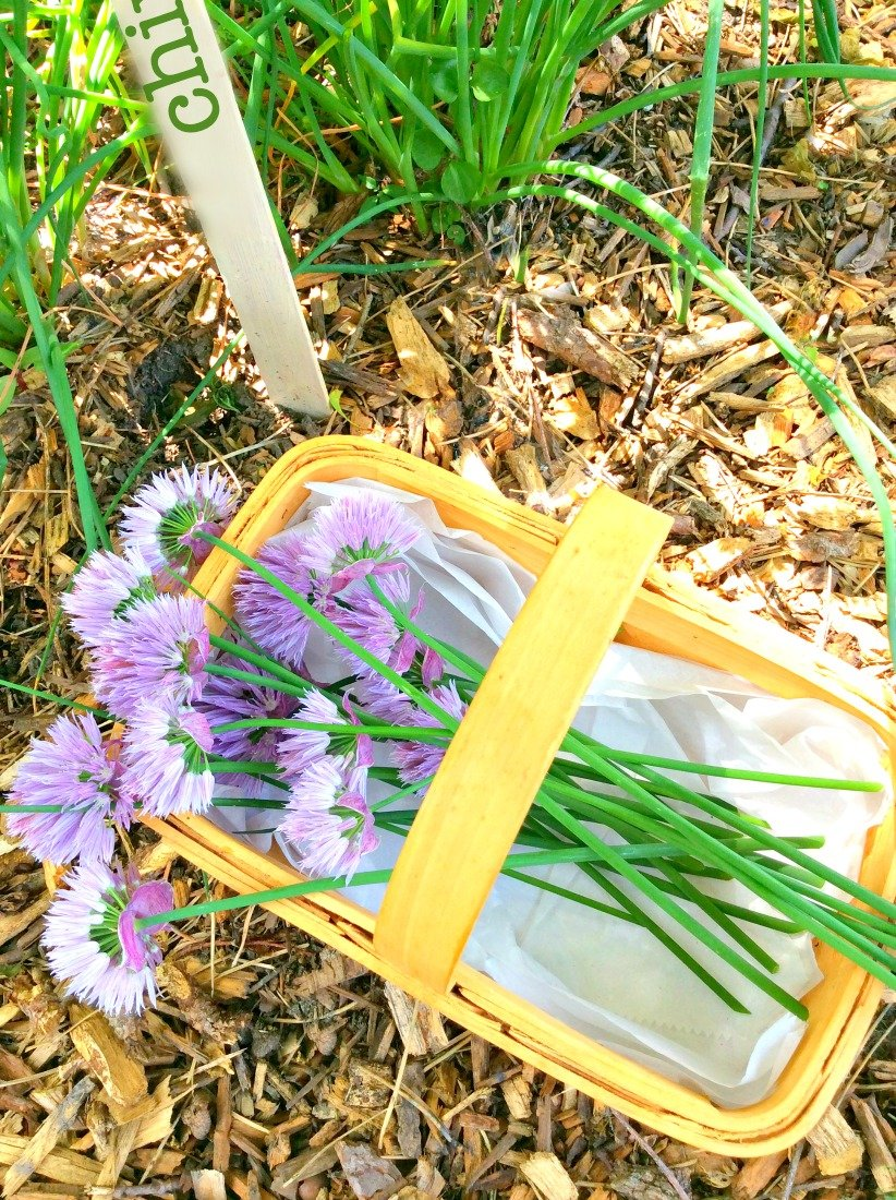 Delicious use for homegrown chives-gcc-gardenchives