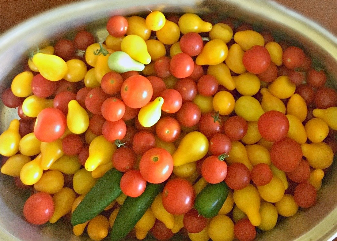 summer garden veggies and more-gcc-toms