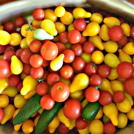 summer garden veggies and more-gcc-toms