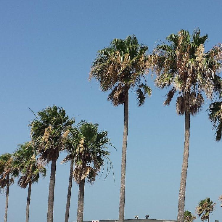 If I were a pelican-palms