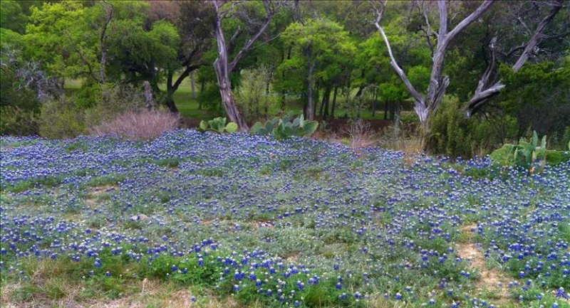 http://www.gullycreekcottage.com/horses-and-bluebonnets-fields