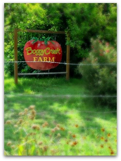 organic farmer-boggy