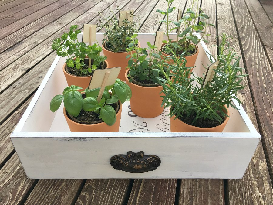 THE CUTEST INDOOR HERB GARDEN DIY-view