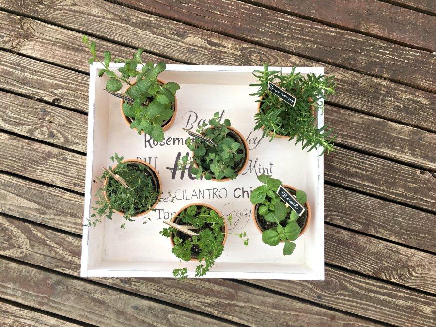 The Cutest Indoor Herb Garden DIY-final