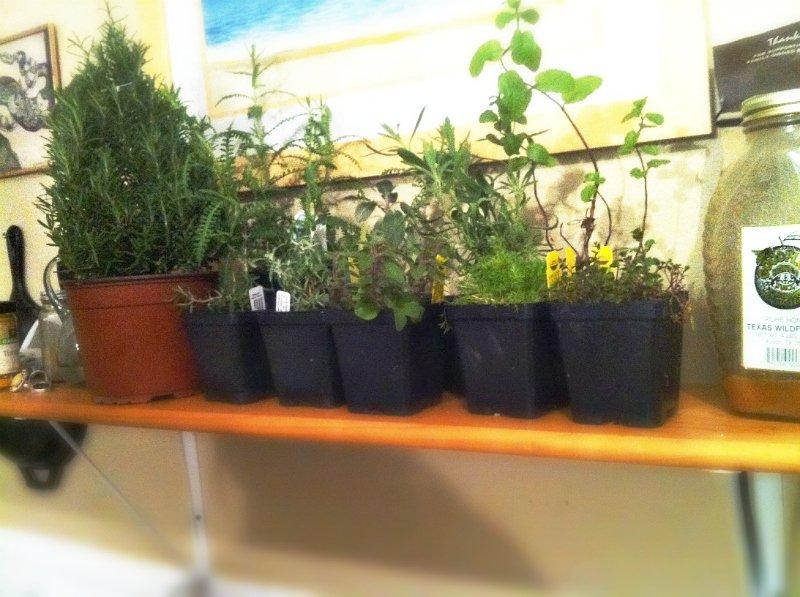 celebrating the BIG 30-herbs