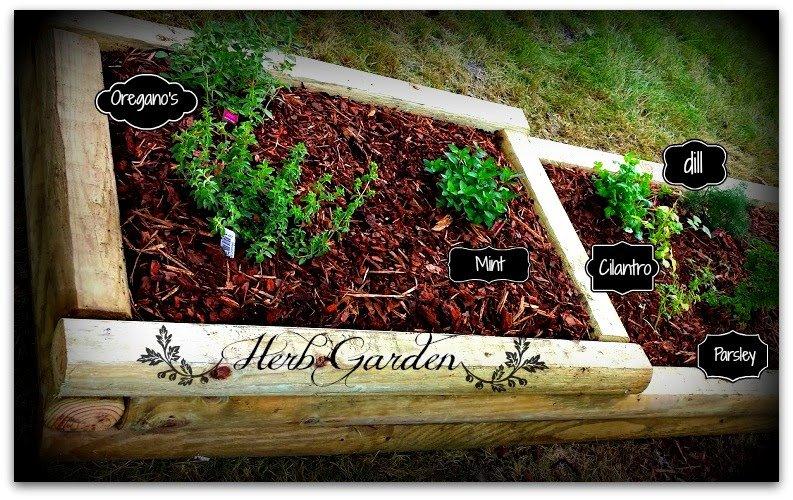 weekend haps-garden-bed-herbs